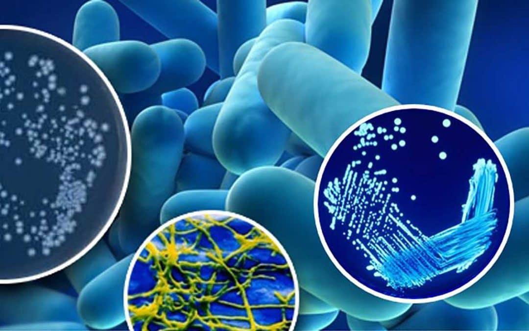 Cómo evitar la infección por legionella en casa